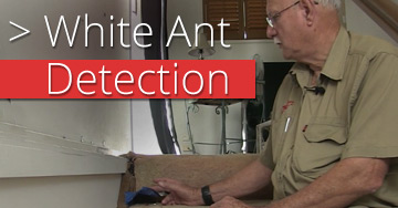 white-ant-detection