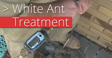 white-ant-treatment
