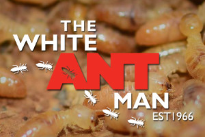 The-White-ant-man