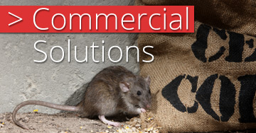 Commercial Pest Control Solutions In Brisbane