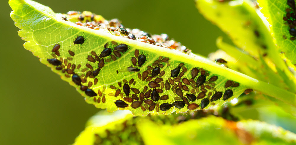 Environmentally Friendly Treatments For Summer Garden Pests