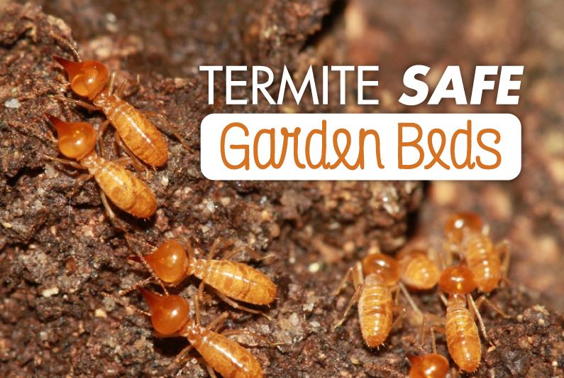 Ant Infestation In Raised Garden Bed