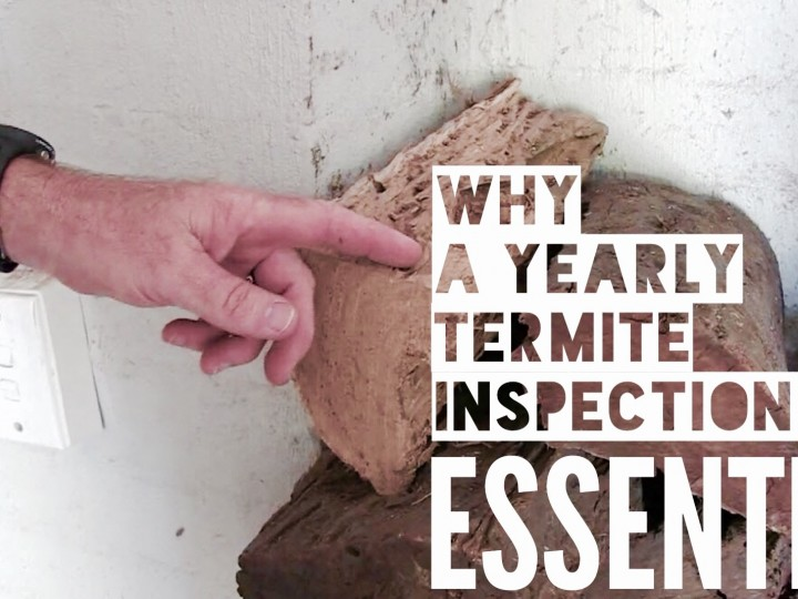 Why a Yearly Termite Inspection is Essential
