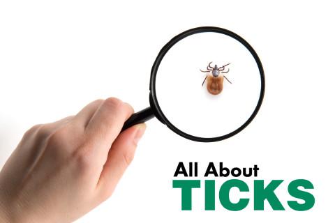 All-about-ticks-header