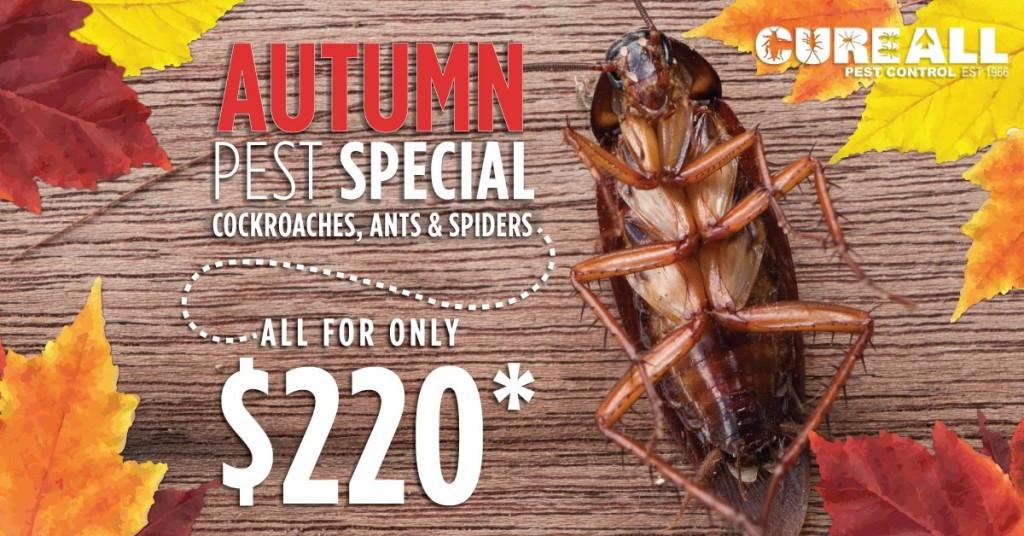 cureall-autumn-pest-control-special-fb-1200x628