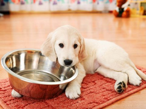 cure-all-pest-control-brisbane-6-things-you-should-never-feed-your-dog-1200x900