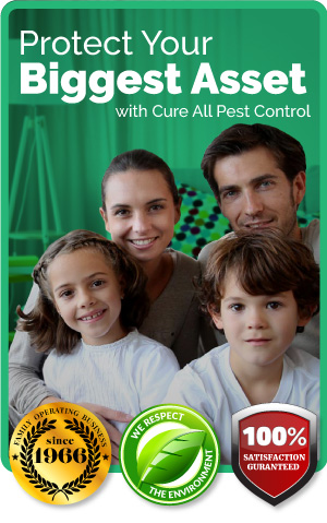 CureAll-Pest-Control-quality-brisbane-family-protection