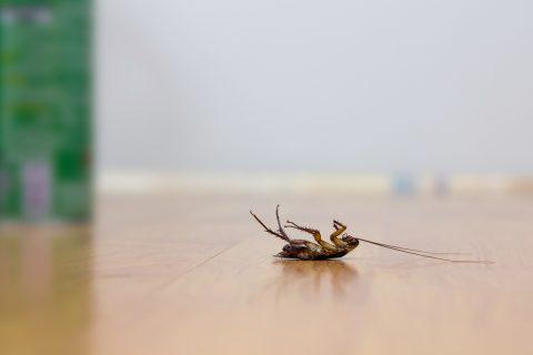 summer cockroach control tips