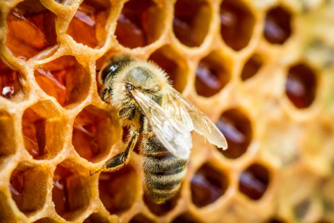 Are bees intelligent?