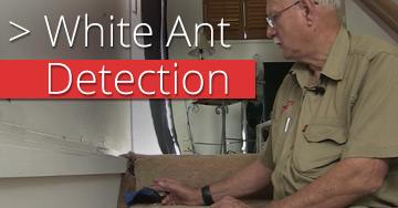 white-ant-detection