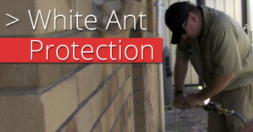 white-ant-protection