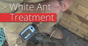 white-ant-treatment