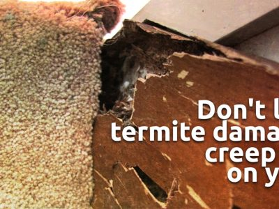 The Importance of Regular Termite Inspections