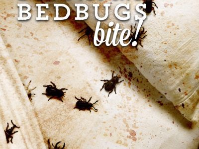 Protect Yourself from Bedbugs When Travelling