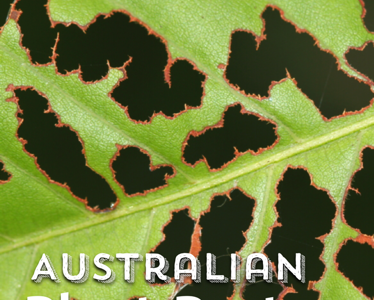 Australian Plant Pests