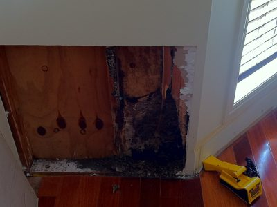The Cost of Termite Damage