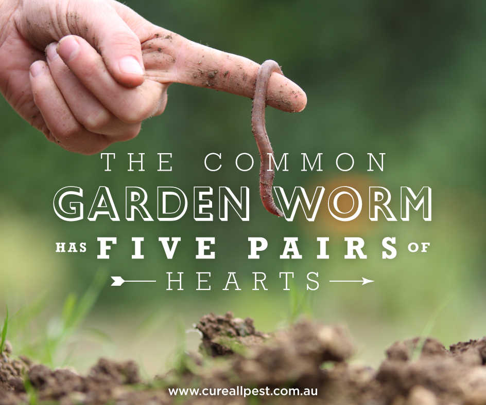 bug-facts-worm