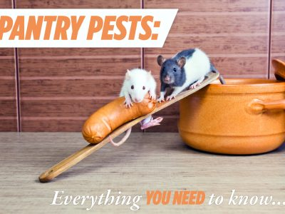 Pantry Pests – Everything You Need to Know