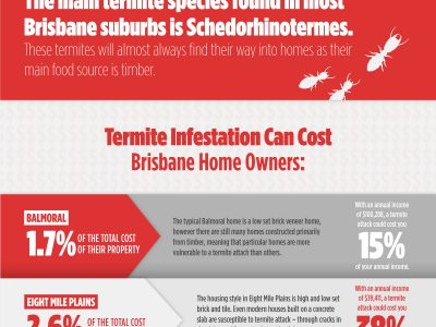 Termites: The tiny pests that cause huge problems