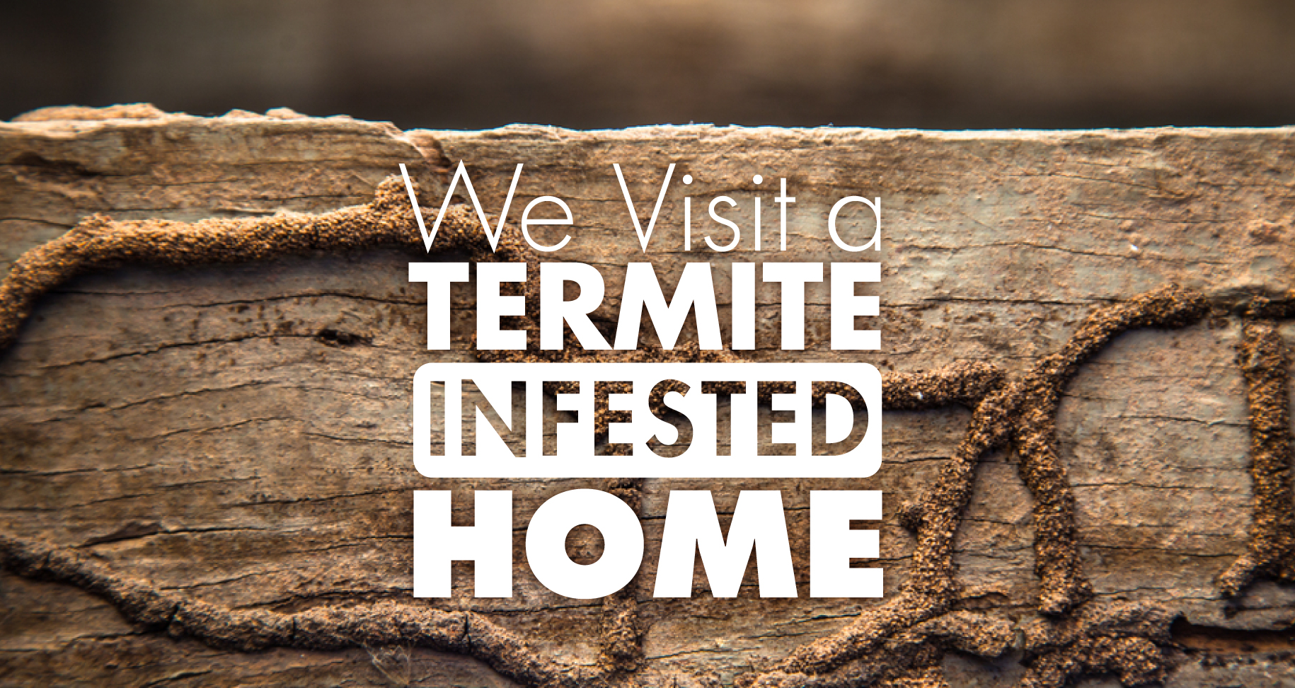 termite-infested-home