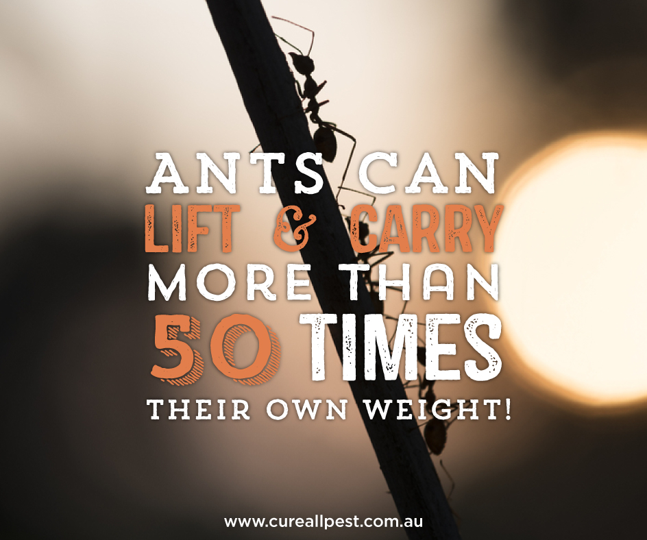 bug-facts-ants-weight