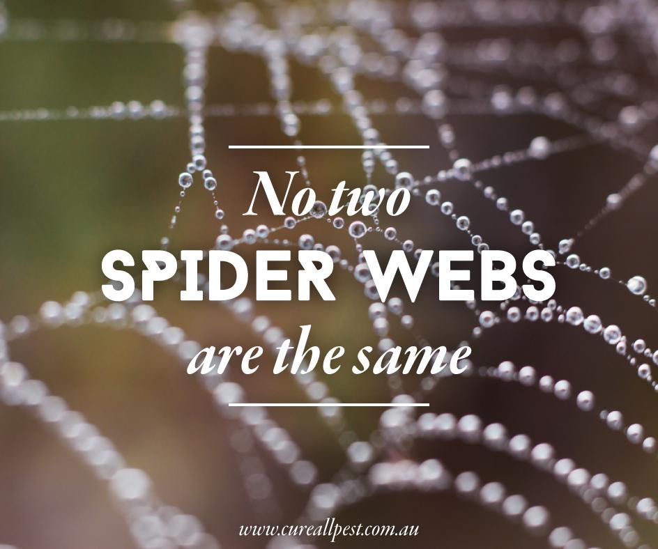 bug-facts-spider-webs