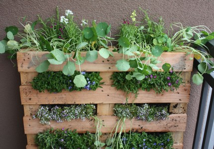 Life in The Balcony: Pallet Garden