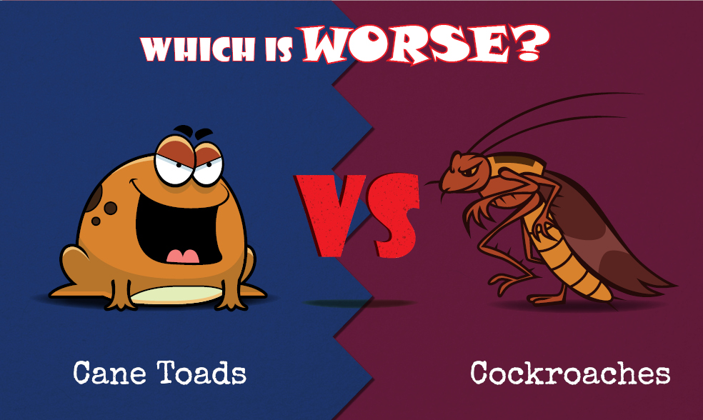 Cockroaches vs Cane Toad image