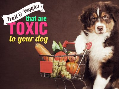 Fruits & Veggies That Are Toxic to your Dog