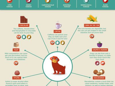 Things Not to Feed your Dog