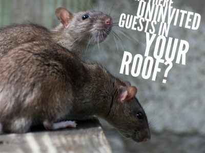 Are There Uninvited Guests in Your Roof?