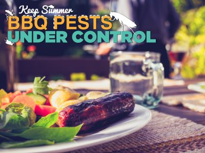 Keep Summer BBQ Pests Under Control