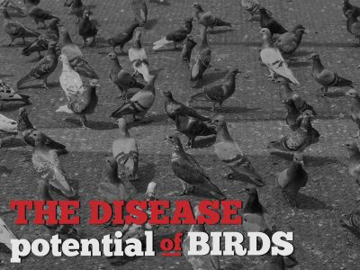 Disease potential of birds