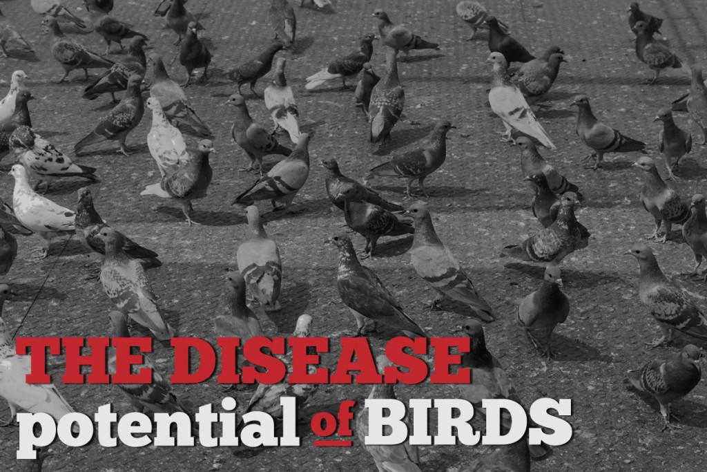 The-diesease-potentialof-birds-header