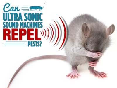 Can ultrasonic sound machines repel pests?