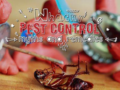 Whacky Pest Control Myths