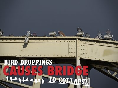Bridge Damaged From Bird Droppings?