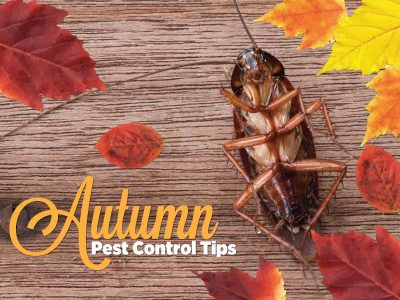 Autumn Pest Control Tips