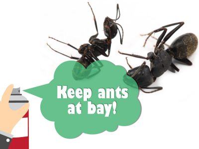 Keep Ants at Bay Around Your Home
