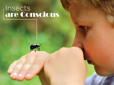 Insects are Conscious