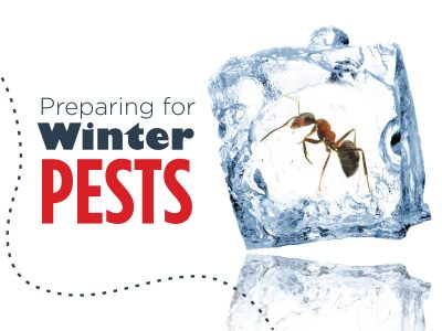 Preparing for Winter Pests