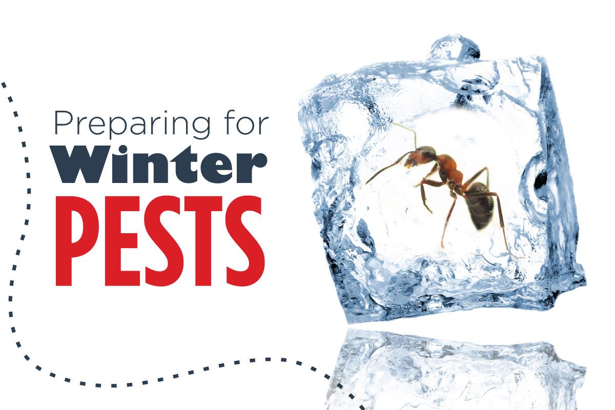 Preparing-for-Winter-Pests-header