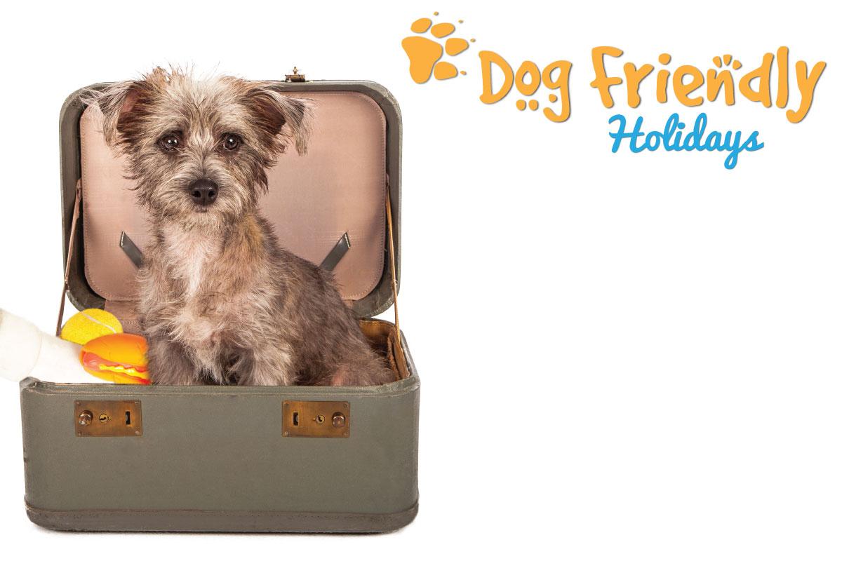 dog-friendly-holidays-header