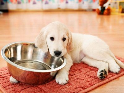 6 foods you should never feed your dog