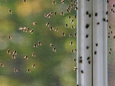 Keep the flies outside this summer: Methods for fly control