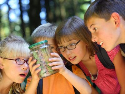 Insects That Make Great Pets for Kids