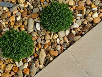 Landscaping considerations to prevent termites eating your home