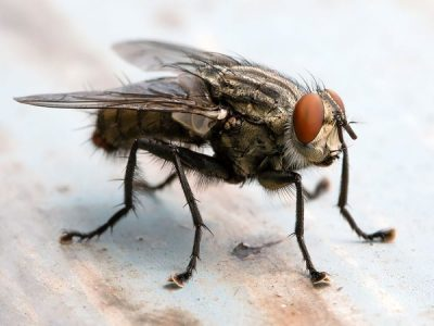 How Many Diseases Do Flies Carry on Their Feet?