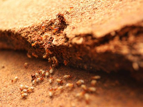 termite management system