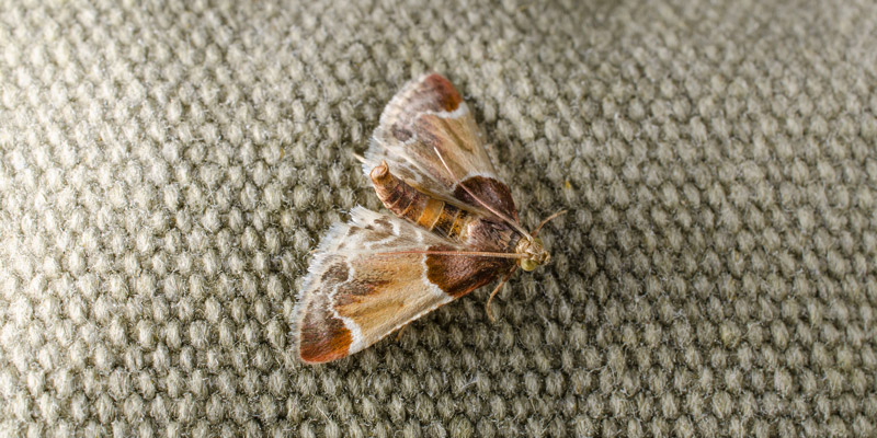 Cure All Pest Control Checking for Pests in the Bedroom Moths